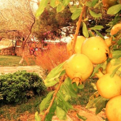 Bağevi bahçe ekim 2016
