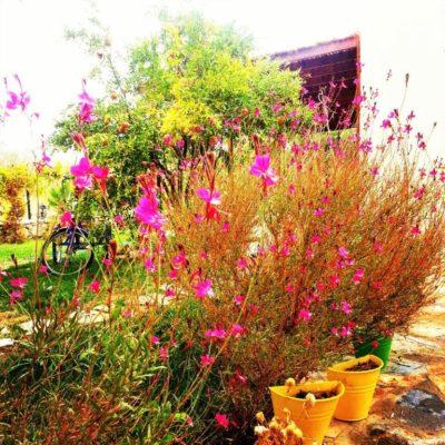 Bahçe foto